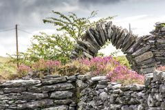Church ruins and Heather on Beara Peninsula. Church ruins with flowering heather near Hungry Hill on the Beara peninsula in West Cork, Ireland Stock Images