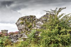 Church Ruins and Storm Grey Sky. Church Ruins hidden by vibrant green bush on the west coast of Ireland stock images