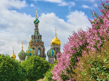 The Church of the Savior on Spilled Blood. In St.-Petersburg, Russia. View from Field of Mars Stock Image