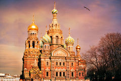 Church of the Saviour on Spilled Blood or Cathedral of the Resurrection of Christ at sunset, St. Petersburg Stock Photography