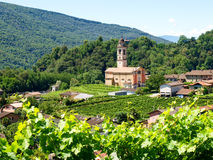 Church of Sessa and vineyards Stock Photo