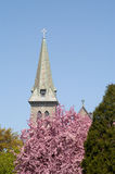 Church Steeple. Against blue sky with flowering tree in foreground, vertical Stock Images