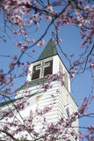 Church steeple with blossoms. Looking up at a classic American country church through pink spring blossoms Royalty Free Stock Photography