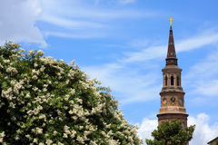 Church steeple and flowers. A church steeple in historic Charleston, Couth Carolina rises about a flowering tree Royalty Free Stock Photography