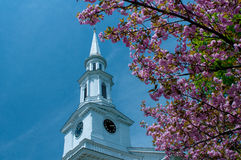 Church steeple framed by cherry blossoms in Lexington, Massachusetts, USA. Stock Photo