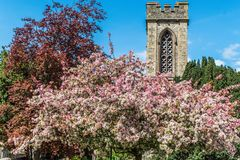 Church tower and belfry with spring blossom. Church tower and belfry surrounded with pink and red spring blossom Royalty Free Stock Image