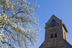 Church tower and flowering magnolia tree, Welsum Royalty Free Stock Images