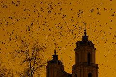 Church towers and many birds Stock Photography