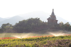 Church in the flower fleld. Church under the mist in the morning royalty free stock image