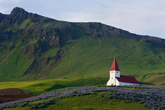 Church in Vik, Iceland. Red-steepled church surrounded by alpine lupin in the town of Vik in Iceland Stock Images