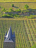 Church in vineyard Royalty Free Stock Photos