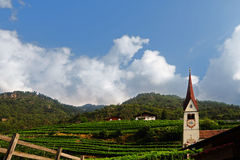 Church and Vineyard Stock Photography