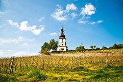 Church and vineyard Stock Image