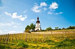 Church and vineyard stock image