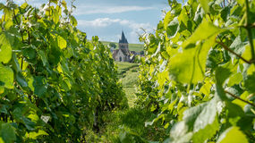 Church in a vineyard Royalty Free Stock Image