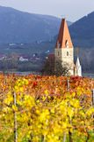 Weissenkirchen. Wachau valley. Lower Austria. Autumn colored leaves and vineyards. Church of Weissenkirchen. Wachau valley. Lower Austria. Autumn colored leaves royalty free stock images