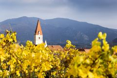 Weissenkirchen. Wachau valley. Lower Austria. Autumn colored leaves and vineyards. Church of Weissenkirchen. Wachau valley. Lower Austria. Autumn colored leaves stock image