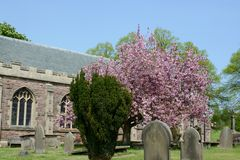 Church yard and blossom in spring Stock Photos