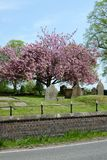 Church yard and blossom in spring Royalty Free Stock Images