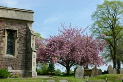 Church yard and blossom in spring Stock Photography