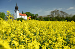 Church in yellow field Royalty Free Stock Photography