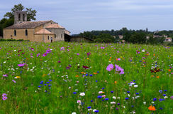 Churche and Flower field fallow Royalty Free Stock Image