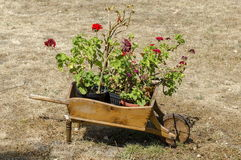 Churchyard  with grass and  pelargonium flower in original flowerpot - wooden wheelbarrow, Batkun Monastery Royalty Free Stock Images