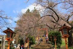 Chureito Pagoda at Arakura Sengen Shrine i. The way to Arakura Sengen Shrine in Japan Royalty Free Stock Images