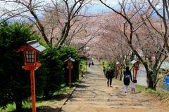 Chureito Pagoda at Arakura Sengen Shrine i. The way to Arakura Sengen Shrine in Japan Royalty Free Stock Image