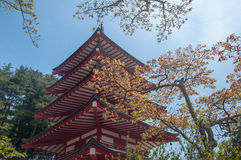Chureito Pagoda. Is a landmarks in Japan with blue sky. Yellow leaf in front of it Stock Photos