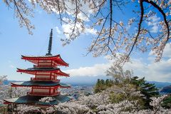 Chureito red Pagoda with beautiful Cherry Blossom or pink Sakura flower tree and Mount Fuji against blue sky. Spring Season at. Fujiyoshida, Japan. landmark and royalty free stock photo