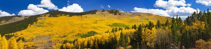 Chute Aspen Forest Panoramic Landscape photo stock