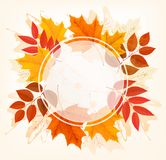 Chute Autumn Colorful Leaves Background Photos stock