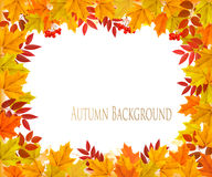 Chute Autumn Colorful Leaves Background Image stock