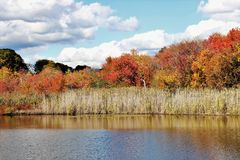 Chute Autumn Scene Feuillage-coloré Photographie stock libre de droits