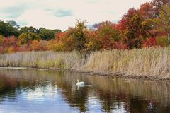 Chute Autumn Scene Feuillage-coloré Photographie stock