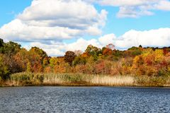 Chute Autumn Scene Feuillage-coloré Image stock
