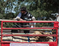 At the Chute. Cowboy at the chute with a bull at the Cottonwood Rodeo in northern California Stock Image
