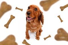 Chute d'aliments pour chiens Photographie stock libre de droits