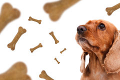 Chute d'aliments pour chiens Image stock