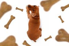 Chute d'aliments pour chiens Photos libres de droits