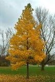 Chute d'automne des feuilles photographie stock