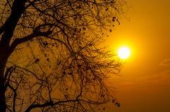 Chute d'or du soleil au-dessous des arbres Photo libre de droits
