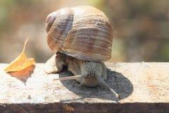 Chute d'escargot Photographie stock