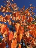 Chute dans l'amour avec l'automne image libre de droits