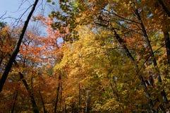 Chute dans l'arborétum, Ann Arbor, Michigan Etats-Unis images stock