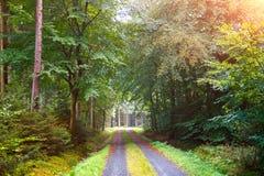 Chute dans la forêt Photos libres de droits