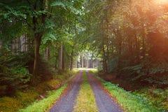 Chute dans la forêt Photographie stock libre de droits