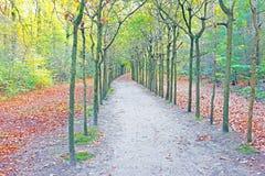 Chute dans la forêt aux Pays-Bas Photos libres de droits