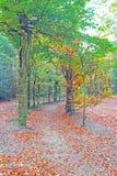 Chute dans la forêt aux Pays-Bas Photos stock
